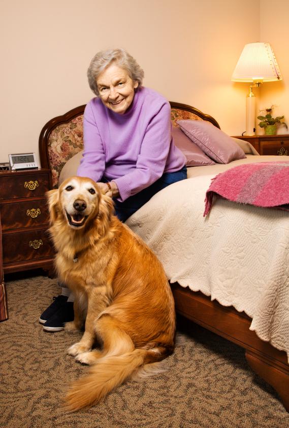 choosing-dog-senior