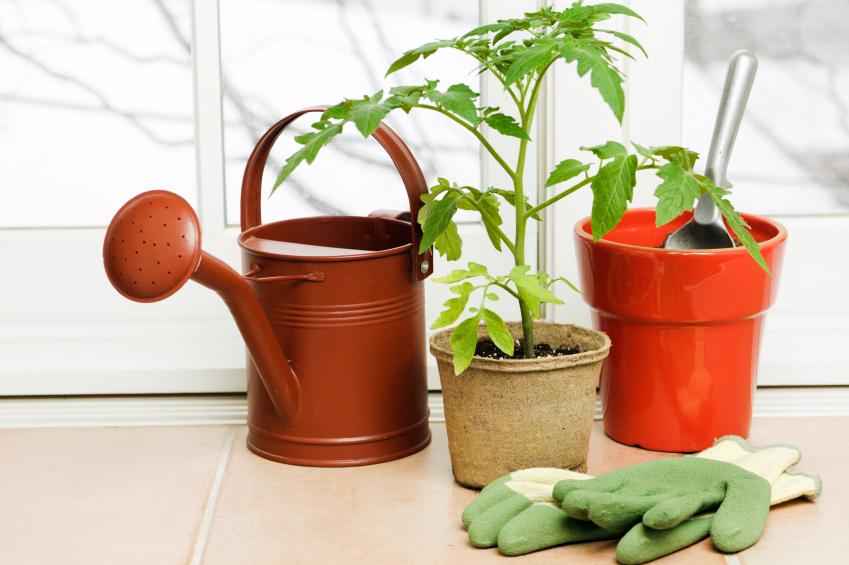 indoor-garden-senior