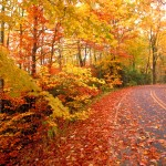 Autumn-fall-road