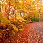 Autumn-fall-road