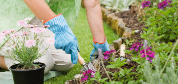Health Benefits of Gardening for Older Adults