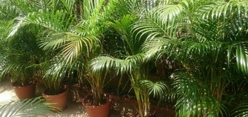 Bring the Outside In: Plants That Purify Air